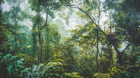 Cuc Phuong National Park travel guide: Tips, getting there
